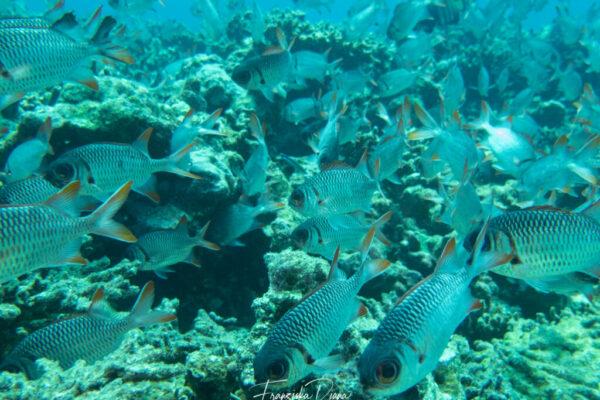 Seychellen Unterwasser mit Funny Diving